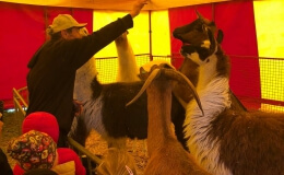 Cirkus Humberto a Zeleňáčci